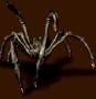 Szmaragdowy pająk