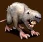 Szary wilczy Szczur