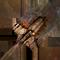łopata, wiedźmin 2, zabójca królów, witcher 2, dodatkowa broń, wiedźmin 2 ekwipunek