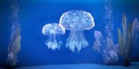 belońskie meduzy