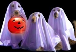 halloween, duchy, psy