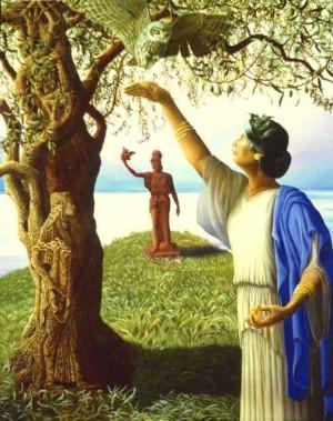 atena, drzewo oliwne