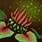 kwitnący jad
