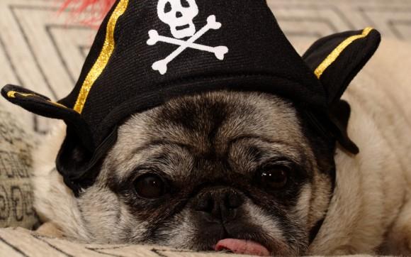 pirat,pieseł