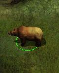 niedźwiedź jaskiniowy