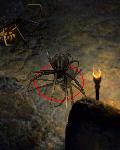 pająk mieczowiec