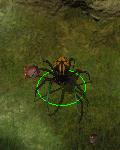 ogromny pająk