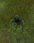 olbrzymi pająk