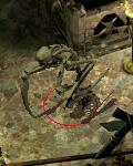 szkielet miecznik